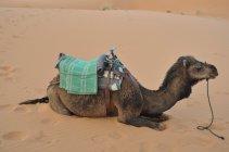 Koráb pouště