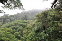 Canopy, NP Monte Verde - Kostarika (3)