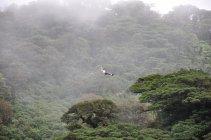 Canopy, NP Monte Verde -Kostarika (6)