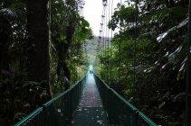 NP Monte Verde -Kostarika (2)