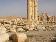 Palmýra (14)