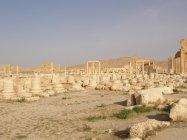 Palmýra (16)