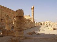 Palmýra (35)