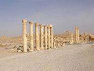 Palmýra (13)