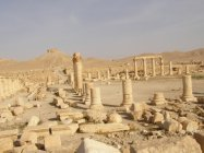 Palmýra (43)