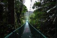 np-monte-verde--kostarika--2-.jpg